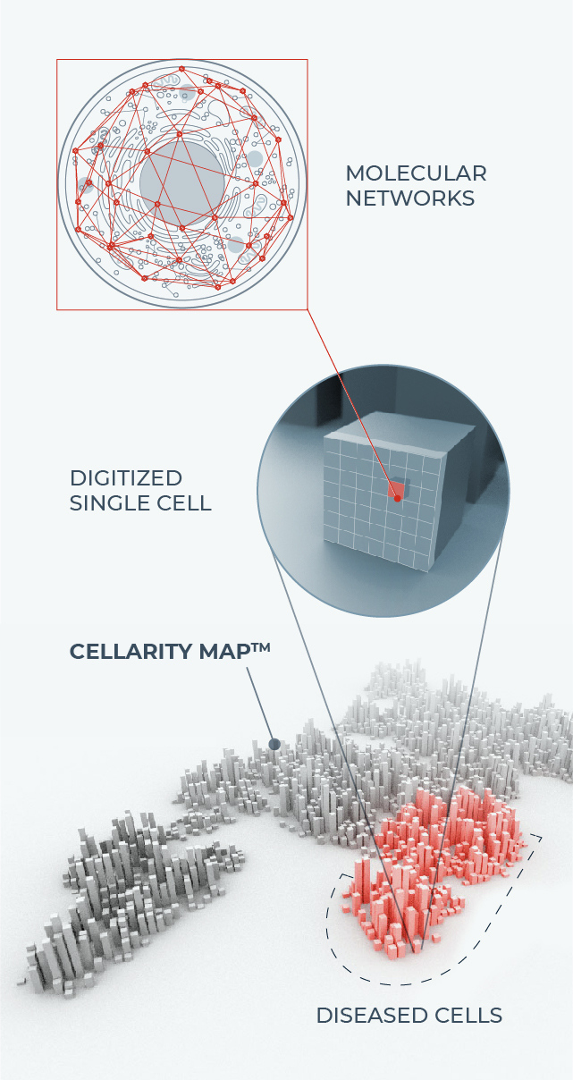 Cell behavior high resolution approach mobile